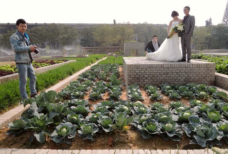 Produção sustentável de verduras e legumes