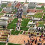 Hortas comunitárias florescem no lugar onde funcionava fábrica