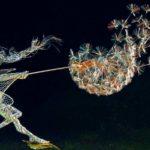 Fadas de fios metálicos dançando ao vento com dentes-de-leão