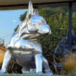 Cachorro Bulldog gigante faz a fama de clínica veterinária