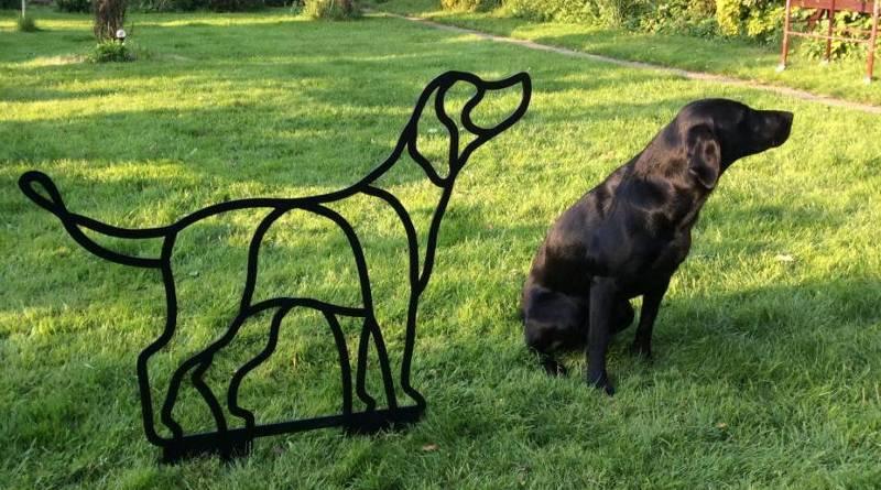 Casal de cães da raça Labrador