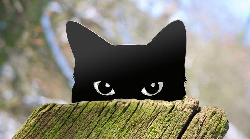 Silhueta de gato preto
